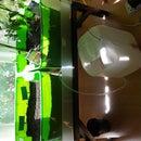 Indoor Herb Garden With Automatic Watering