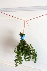 Hang and Dry Your Herbs