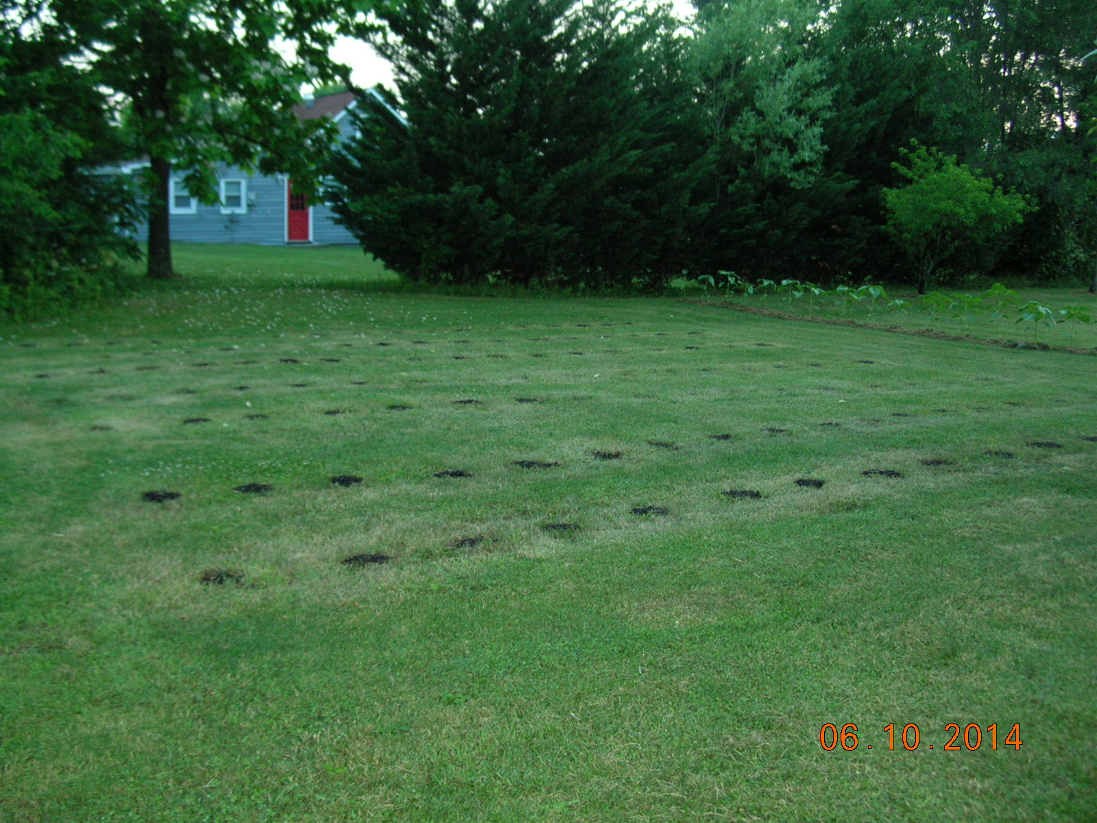 Picture of Grow a Big Organic Tomato Garden Without Tilling
