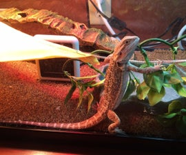 The Proper Way to Set up a Bearded Dragon Enclosure