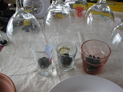 Building the Shot & Wine Glass Terrarium / Seed Starter