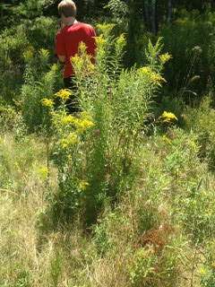 Picture of Caution: Poisonous Invasives