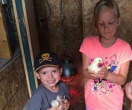 How to Hatch Chicken Eggs Using Incubator - Procedures