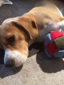 Knitted Dog Ball That Helps Clean Their Teeth