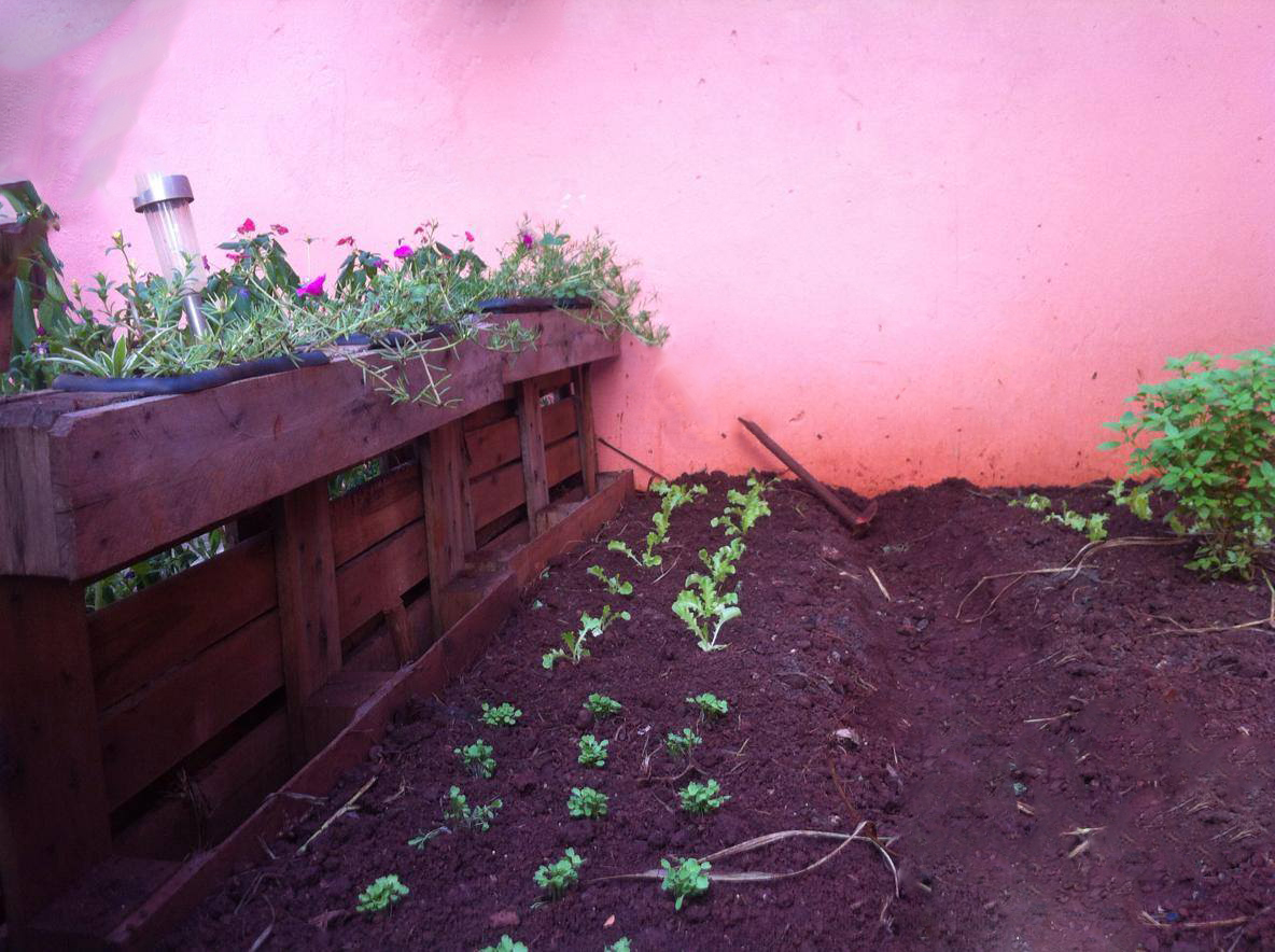 Picture of Now Just Planting and Harvesting. Follow the Evolution of My Garden in One Year . Thank You