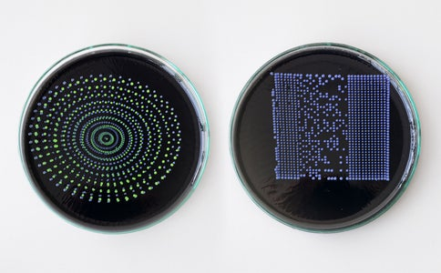 Print Microorganisms With Pic to Print Block