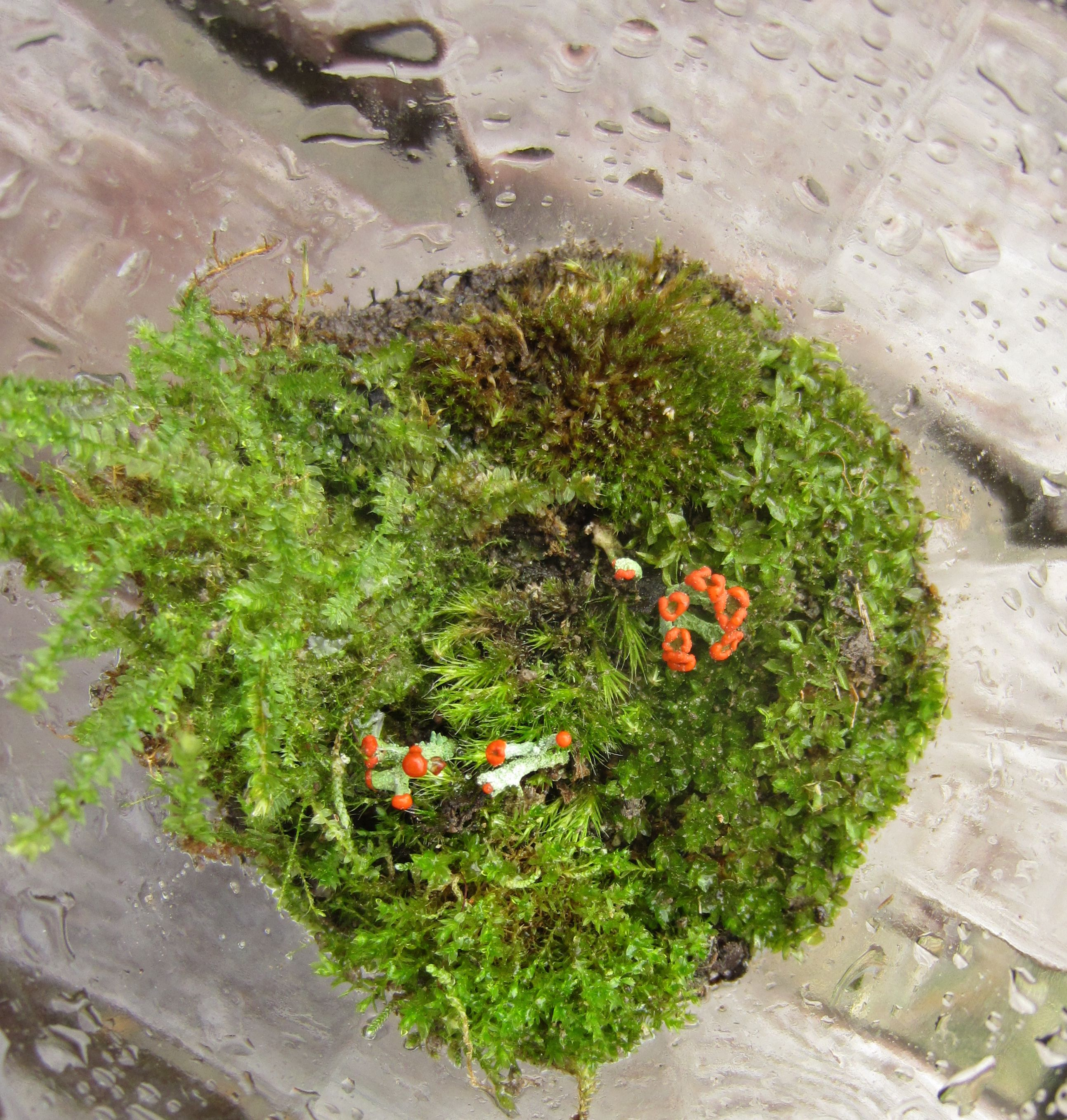The Basics Of Closed Jar Terrariums 5 Steps With Pictures