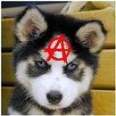 AnarchistAsian