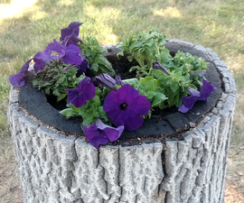 Turn a Stump Into a Planter