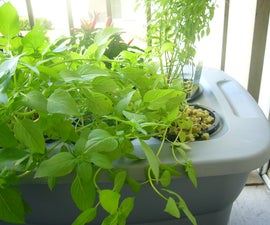 Solutions to Hydroponic Problems (Lack of Root-Plant Support)