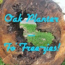 Oak Stump Planter - For Free-zies!