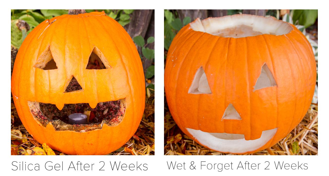 Picture of Best Pumpkin Preservation Method