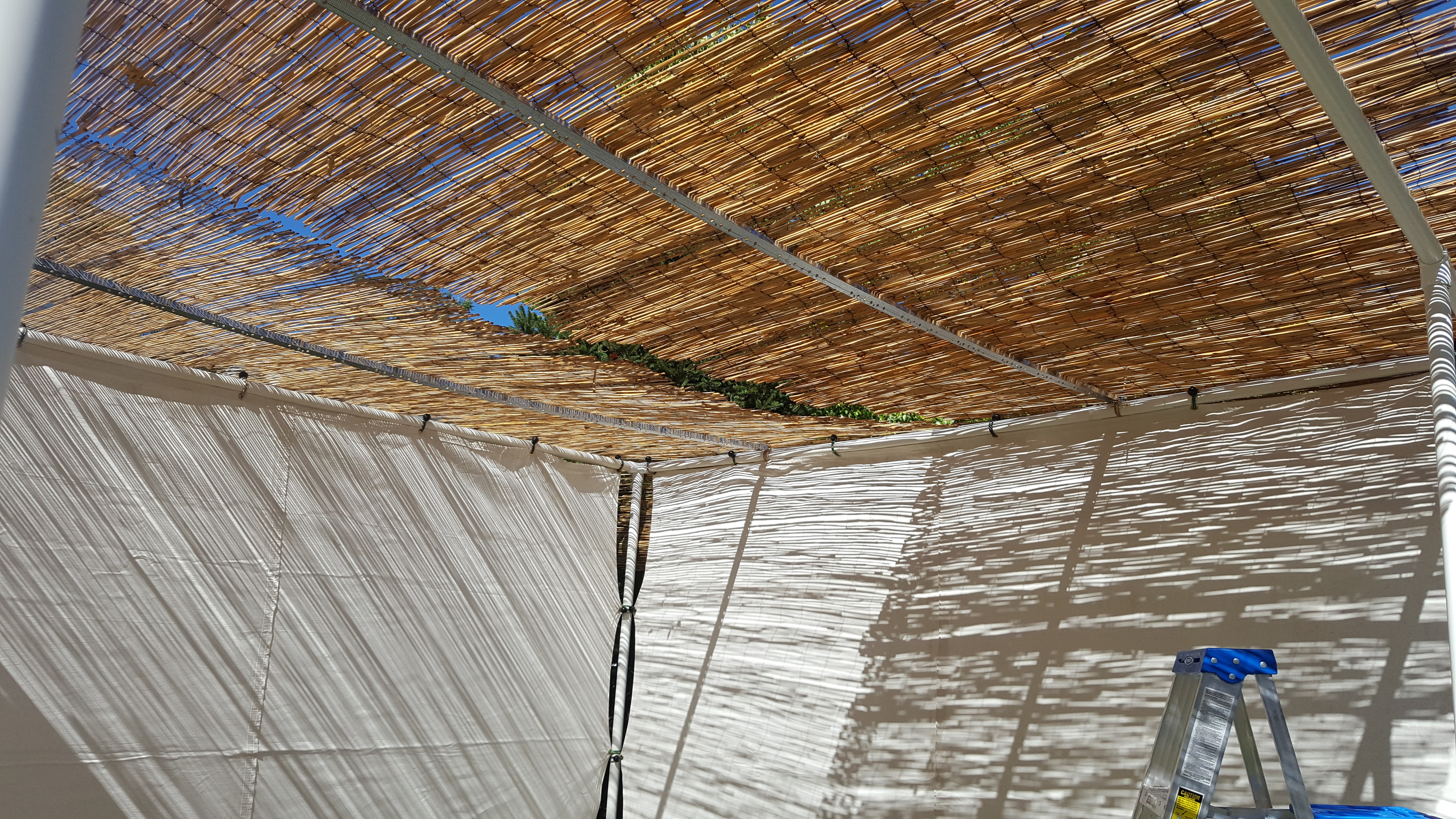 Picture of Cover the Sukkah With a Roof