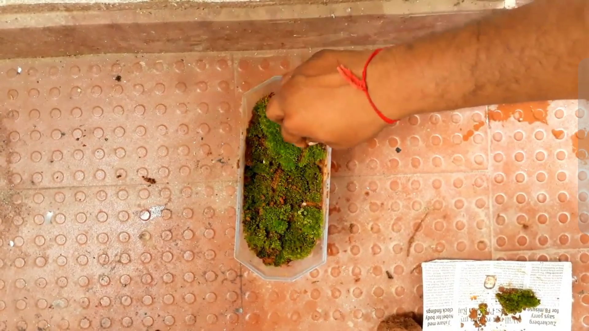 Picture of Planting Moss