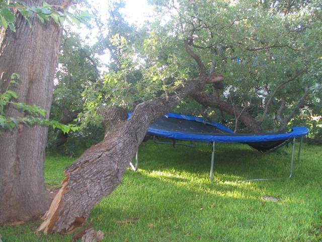Picture of Firewood Rack-Trampoline Reincarnated