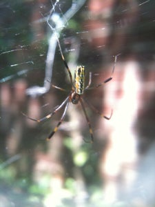 Understand Which Species Make the Right Webs