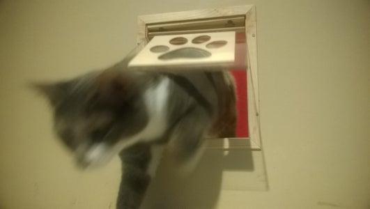 Indoor Pet Flap