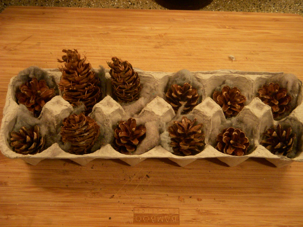 Picture of Deploy the Pine Cone Array