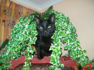 Real Looking Cat Climbing Tree