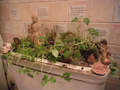 Toilet-Top Garden