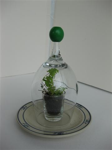 Picture of Shot & Wine Glass Terrarium / Seed Starter