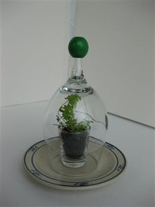 Shot & Wine Glass Terrarium / Seed Starter