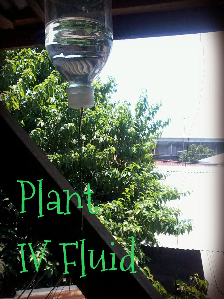 Picture of Plant IV Fluid