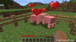 Picture of How to Breed Pigs