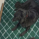 Stumble-Proof Mat for Pet Owners