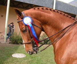 How to braid your Horse's mane