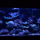 Full Spectrum 40 Breeder LED fixture