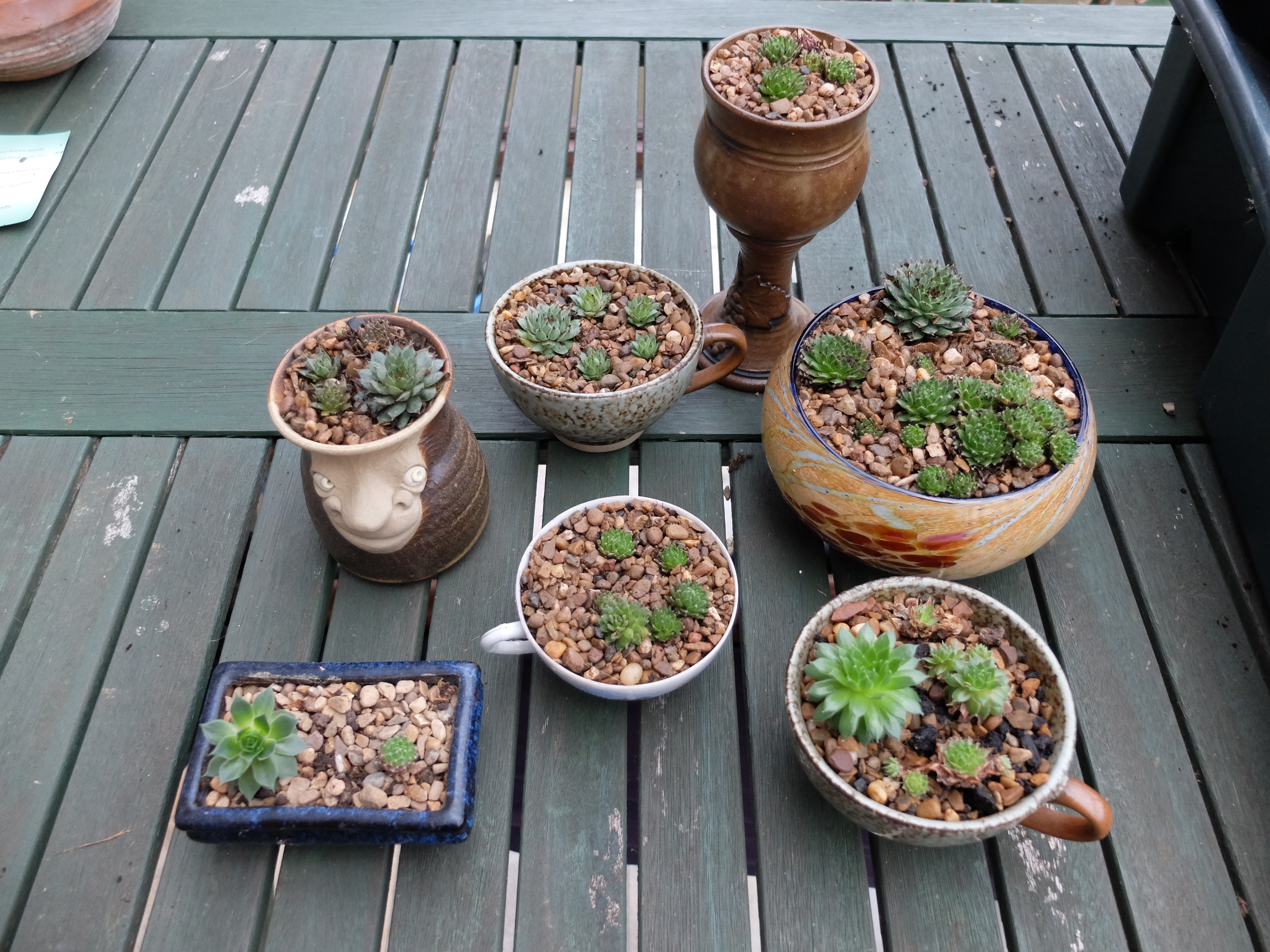 Picture of Simple and Unusual Planted Pots for Indoors