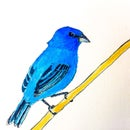 How to Paint an Indigo Bunting