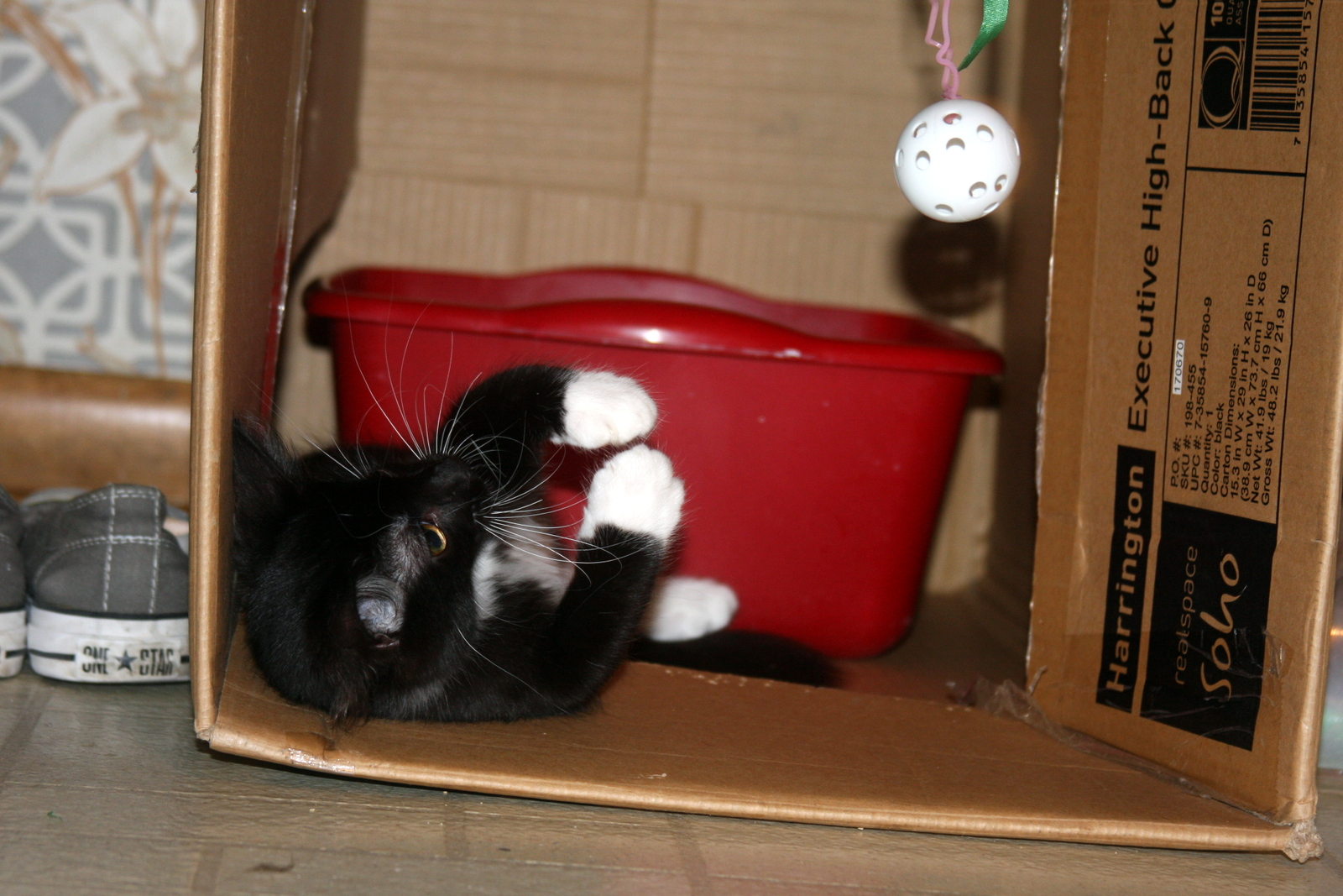 Picture of Kitty Play Room