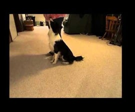 Teaching a Dog to Heel, Obedience Style and Casual Style