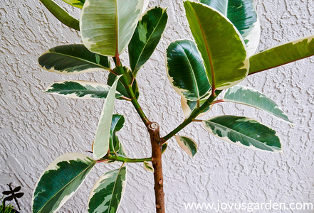 Head's Up: You Want to Remove the As Much As the Leaf Stem From the Trunk As You Can. It Just Looks Better That Way.