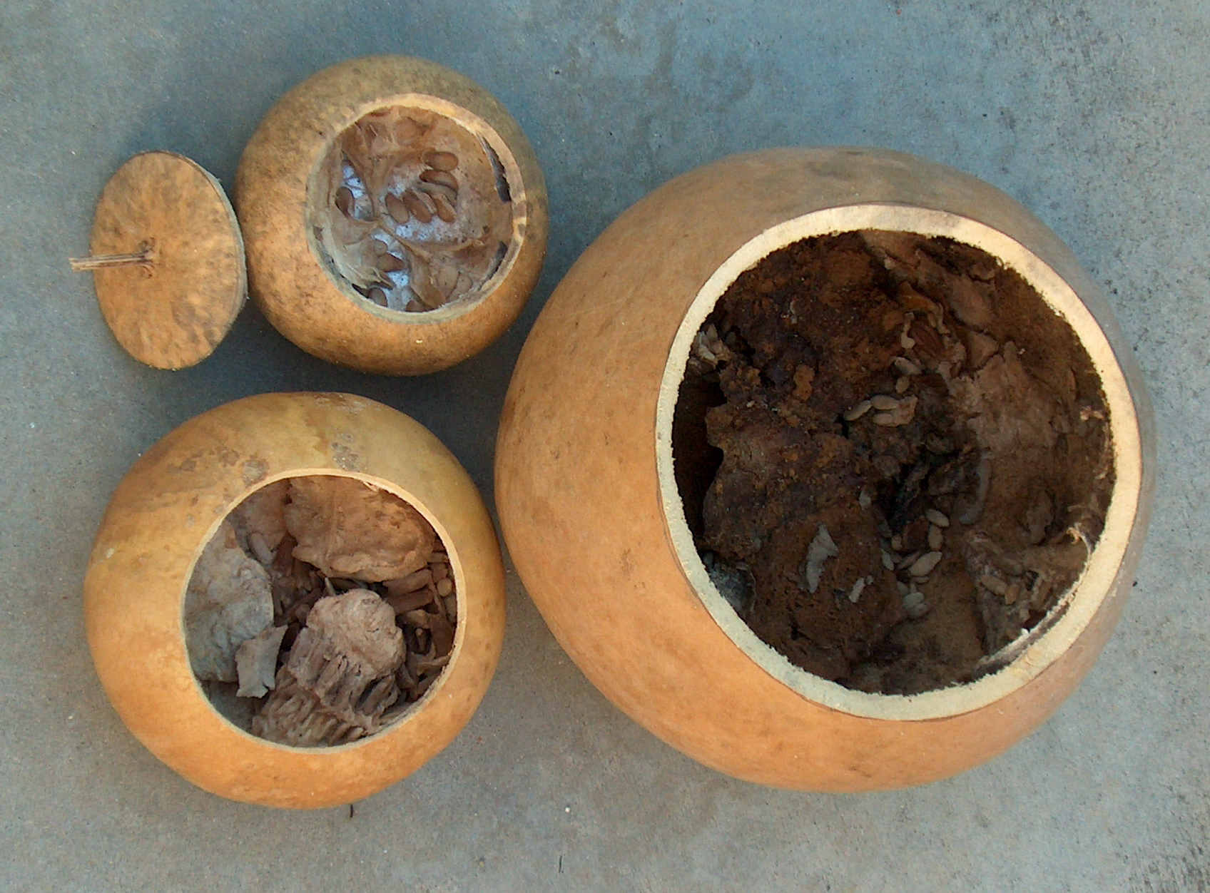 Picture of Assess Your Gourd Gunk.