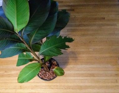 Turning Garden Bulbs Into Houseplants