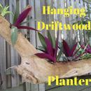 Hanging Driftwood Planter