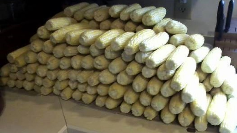 Picture of Sorting Your Corn