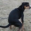 Dog Poop Deterrent--No Longer Recommended