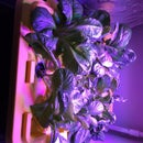 TRUE Aeroponics - Simple Indoors Low Water Lettuce Growing Fogponics System