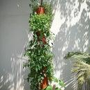 DIY Organic Vertical Planter