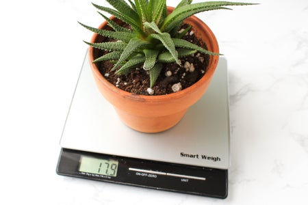 Checking When to Water Plants by Weight