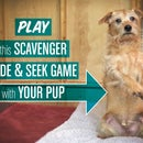 "Scavenger ""Hide & Seek"" Game for Dogs"
