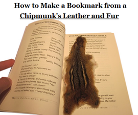 How to Make a Bookmark From a Chipmunk