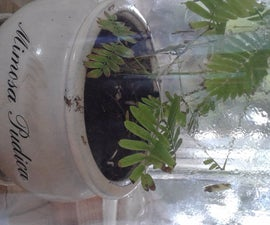Sensitive Seed Starter