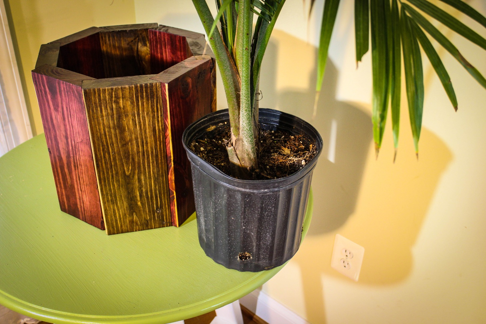 Picture of Plant Added to Planter