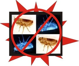 Control Fleas Naturally with Common Household Items