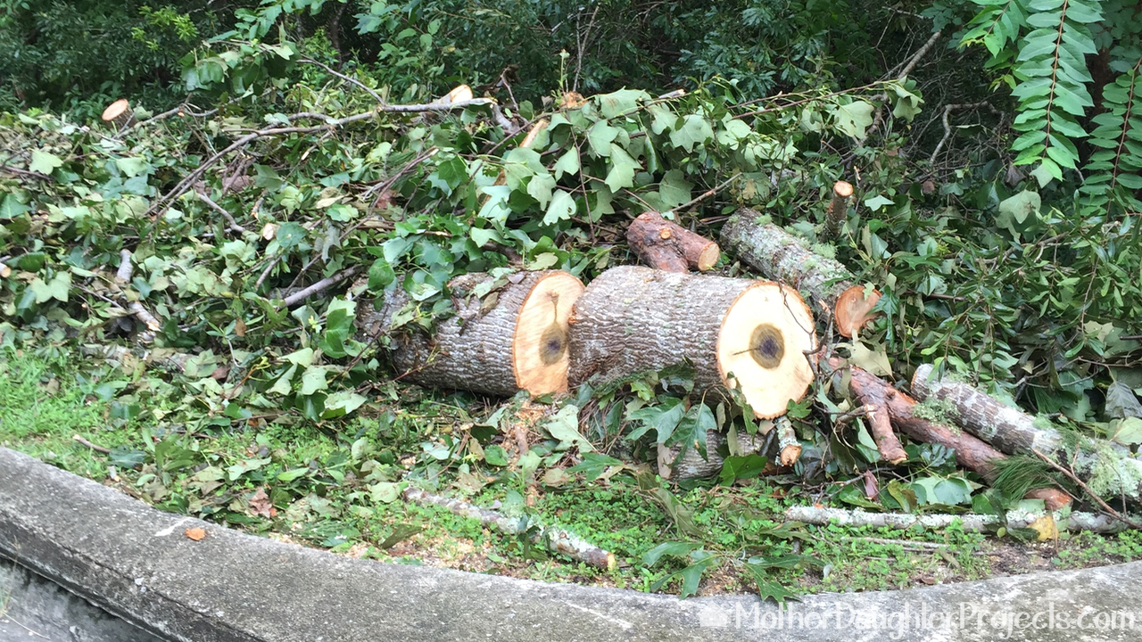 Picture of Find a Source of Logs